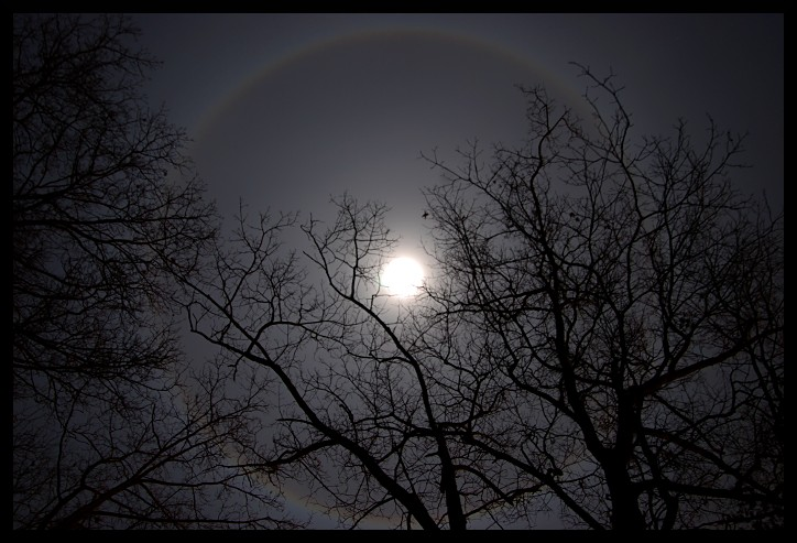 moon, casting a rainbow in a circle around it, viewed through the silhouettes of leafless trees